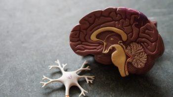Key Nutrients For A Healthy Brain
