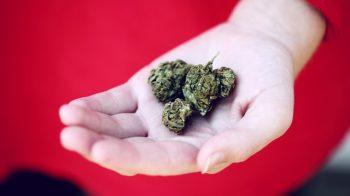 8 Surprising Health Benefits of Medical Marijuana