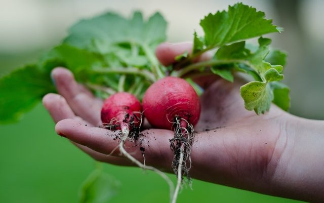 7 Reasons to Start Your Own Organic Vegetable Garden