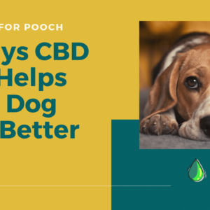 3 Ways CBD Oil Helps Dogs