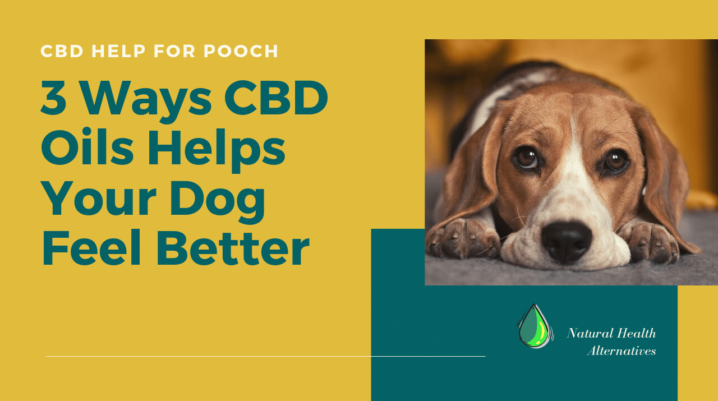 3 Ways CBD Oil Helps Dogs